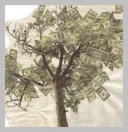 money-tree-2-300x257